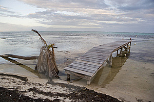 A Fallen Palm And Pier At Sunset Royalty Free Stock Photos - Image: 8512658