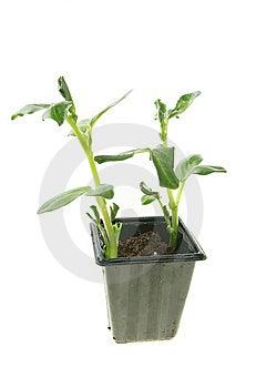 Seedlings Stock Photo - Image: 8512830