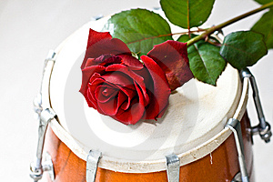 Red Rose On A Dhol Drum Stock Photos - Image: 8512973