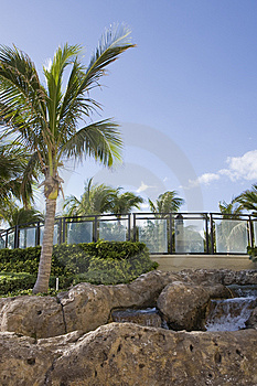 Palm Tree And Fountain Stock Photography - Image: 8513002