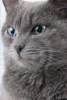 Grey Cat Stock Photos - Image: 8513323