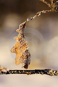 Frozen Leaf Royalty Free Stock Photography - Image: 8513577