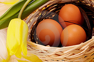 Eggs In Nest With Flower Royalty Free Stock Photos - Image: 8513718