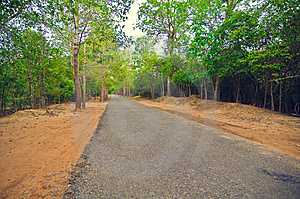 Secondary Road Path From Angkor`s Temple.Cambodia Stock Photo - Image: 8516110