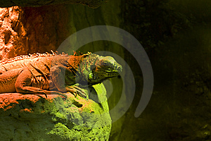 Reptile Royalty Free Stock Image - Image: 8517146