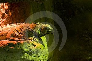 Reptiel Royalty-vrije Stock Afbeelding - Afbeelding: 8517146