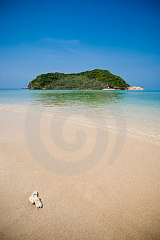 Coral On Empty Beach Stock Photography - Image: 8519172