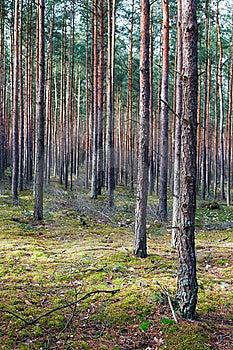 Trees Stock Photos - Image: 8519683