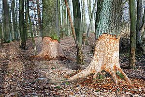 Old Root Royalty Free Stock Photography - Image: 8520027