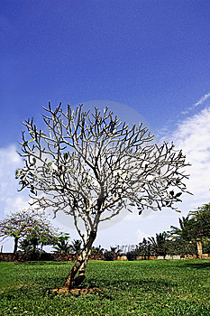 A Tree In Heaven Stock Photo - Image: 8522120