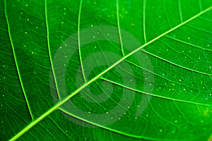 Leaf Patterns Royalty Free Stock Photos - Image: 8522318