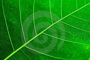 картины листьев Стоковые Фотографии RF - изображение: 8522318