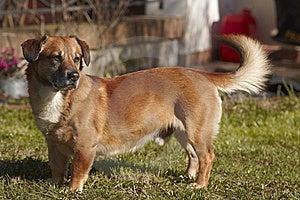 Dog Waits Stock Images - Image: 8522504