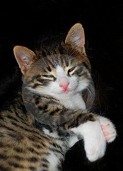 Sleepy Cat Stock Photography - Image: 8522512