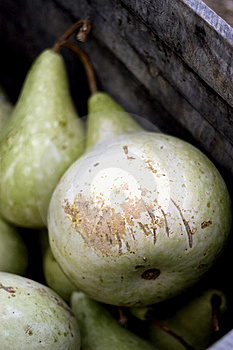 Squash Stock Photos - Image: 8523263