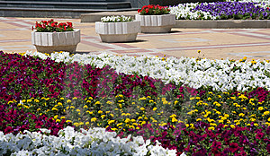 Flower Bed Royalty Free Stock Photography - Image: 8523627