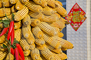 Corn On The Cob Stock Images - Image: 8523634