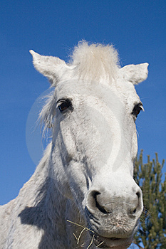 Horse Head Against Blue Sky Royalty Free Stock Photography - Image: 8524947