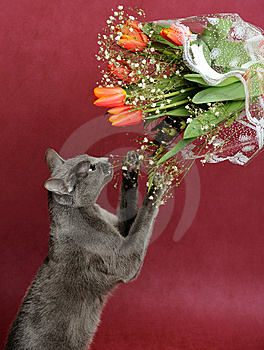 Cat Stock Image - Image: 8525301