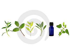 Aromatherapy Herb Leaf Sprigs Stock Photos
