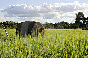 Harvest Stock Images - Image: 8526234