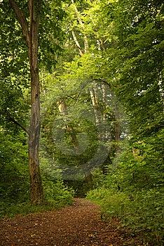 Wood Track Stock Photo - Image: 8526840