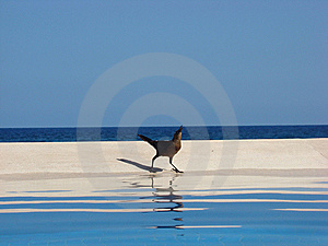Cancun Bird 1 Royalty Free Stock Photo - Image: 8527635