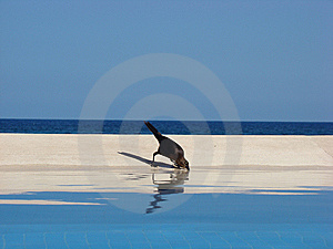 Cancun Bird 2 Royalty Free Stock Image - Image: 8527686