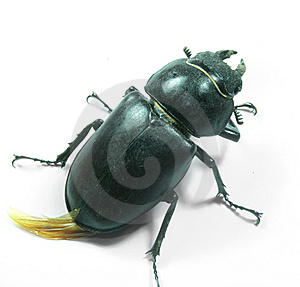 Bug Stock Image - Image: 8527861