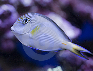 Marine Aquarium Fish Tank Stock Photography - Image: 8528052
