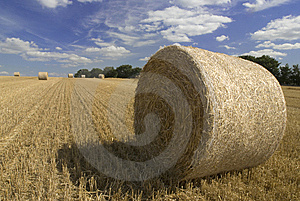 Harvest Straw Royalty Free Stock Photo - Image: 8528295