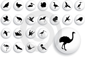 Big Set Buttons - 18_B. Birds Royalty Free Stock Image - Image: 8529486