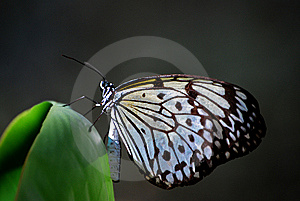 Butterfly Mountain Stock Photography - Image: 8529872