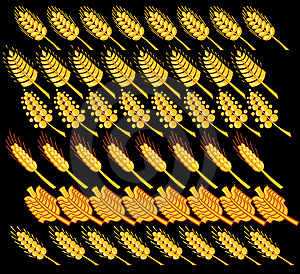 Wheat 3 Royalty Free Stock Images - Image: 8530609