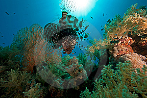 Coral, Ocean And Fish Royalty Free Stock Photo - Image: 8531335