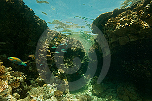 Coral, Ocean And Fish Stock Image - Image: 8531431