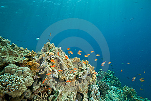 Coral, Ocean And Fish Stock Image - Image: 8531471