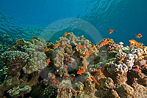 Coral, Ocean And Fish Royalty Free Stock Images - Image: 8531489