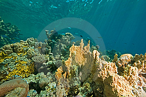 Coral, Ocean And Fish Royalty Free Stock Photos - Image: 8531508