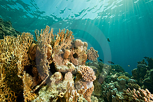 Coral, Ocean And Fish Royalty Free Stock Photography - Image: 8531567