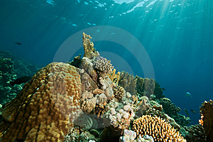 Coral, Ocean And Fish Stock Photography - Image: 8531602