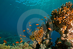 Coral, Ocean And Fish Stock Photos - Image: 8531633