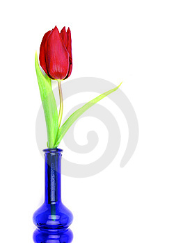 Tulip In Bottle Stock Photo - Image: 8531640