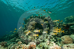 Coral, Ocean And Fish Stock Photos - Image: 8531753