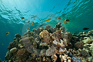 Coral, Ocean And Fish Royalty Free Stock Photo - Image: 8531785