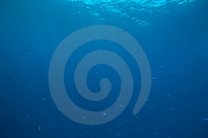Ocean And Fish Royalty Free Stock Images - Image: 8531969