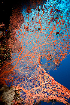 Seafan, Ocean And Fish Stock Images - Image: 8532094