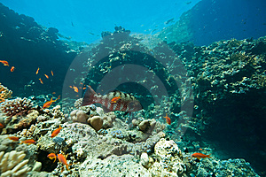 Coral, Ocean And Fish Stock Photo - Image: 8532210
