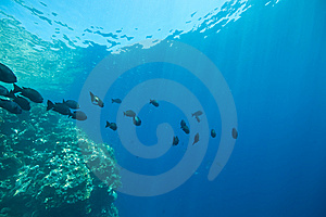 Coral, Ocean And Fish Royalty Free Stock Image - Image: 8532266
