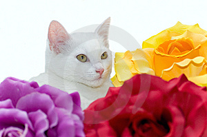 White Cat Royalty Free Stock Photography - Image: 8532267
